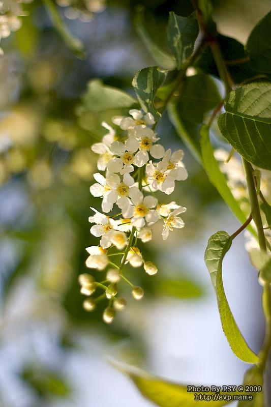 05_flowers_800_001.jpg