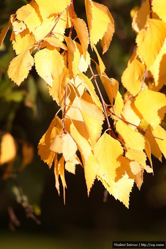 09_autumn_009.jpg